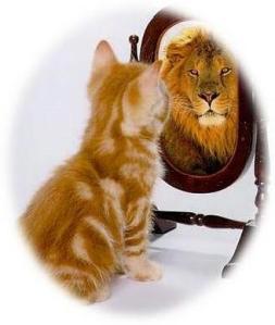 self esteem cat lion